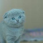 kitten portrait